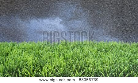 Spring Summer Lawncare Rain