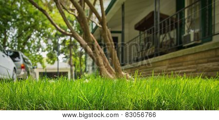 Spring Summer Lawncare