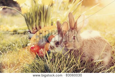 Living Easter bunny with eggs in a basket on a meadow in spring, filtered image
