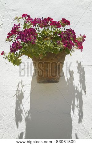 Flower Pot And White Wall In Andalucia. Cadiz. Spain