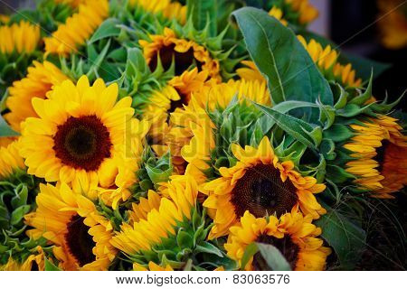 Decorative Sunflowers Bunch