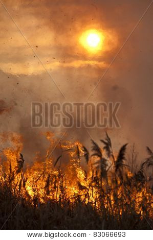Fire in the reeds.