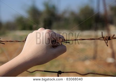 Rusty Barbed Wire In A Child's Hand