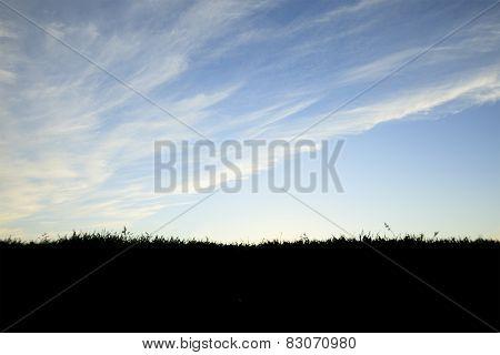 Surreal blue ,dramatic sunset back lit grass