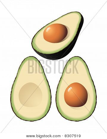 Vector Avocado