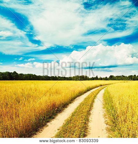 Summer Landscape with Oat Field and Country Road