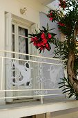 stock photo of oleander  - Decorations balcony railing and great flowering oleander
