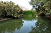 pic of oasis  - Einot Zokim or Ein Feshka a blooming desert oasis on the shore of the Dead Sea Israel - JPG