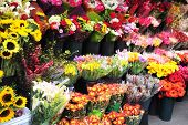 pic of flower shop  - New yorkers flowers shop in Manhattan New York USA - JPG