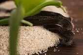 stock photo of vanilla  - vanilla sugar and vanilla beans on wooden table - JPG