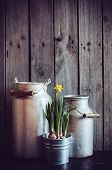 image of farmhouse  - Two vintage aluminum cans and blooming narcissus in metal plant pot on a wooden boards background rustic farmhouse gardening - JPG