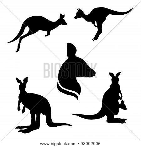 Kangaroo set vector