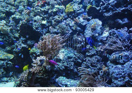 small tropical fish