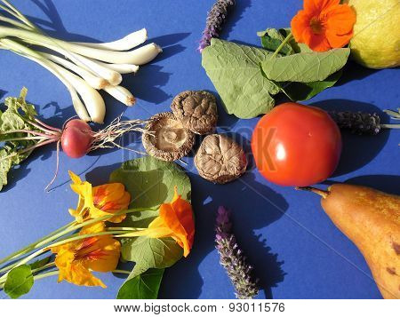 Colorful Lunch In Organic Garden