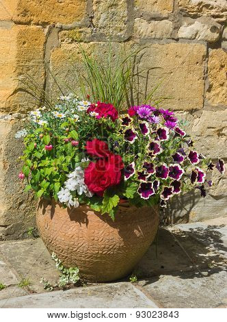 Colorful Plants In A Terracotta Pot, Including Begonia, Petunia, Fuchsia, Impatiens