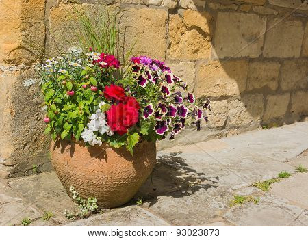 Colorful Plants In A Terracota Pot, Including Begonia, Petunia, Fuchsia, Impatiens