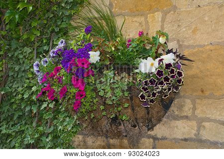 Colorful Plants In Wall Mounted Wrought Iron Basket  Including Begonia, Petunia, Ivy.