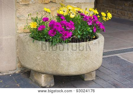 Stone Trough With Yellow And Purple Daisies.