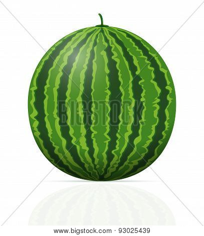 watermelon ripe juicy vector illustration