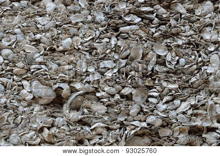 Coquina Shell Wall