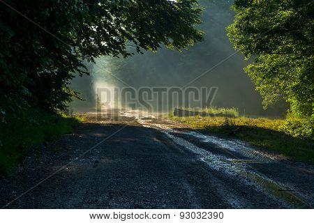 Light through Treetops