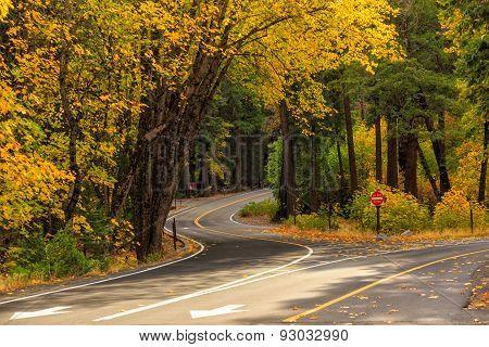 Road In Yosemite National Park