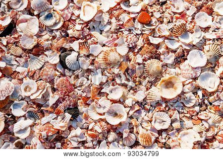 Shell Background. Many Colorful Sea Shells Of Different Kinds And Shapes.