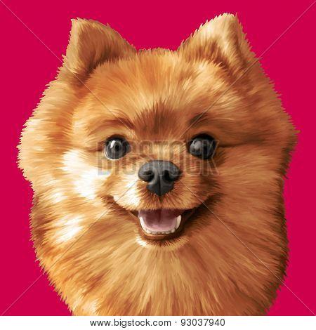Vector Illustrative Portrait Of Pomeranian Spitz Dog. Eps 10.