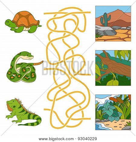 Maze Game (turtle, Snake, Iguana And Habitat)