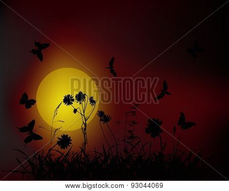 illustration with chamomile flowers in grass silhouettes at dark sunset