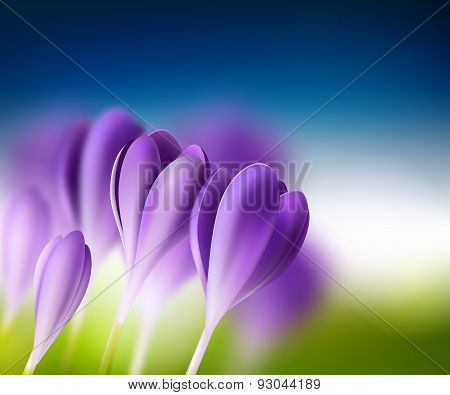 Bright Summer Background With Crocuses