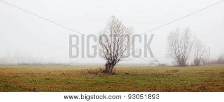 Spring Landscape With Lonely Tree