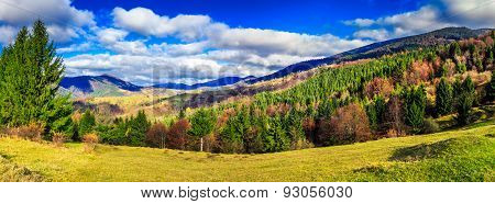 Coniferous Forest In Autumn  Mountains