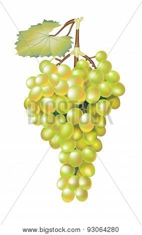 Green Fresh Grapes