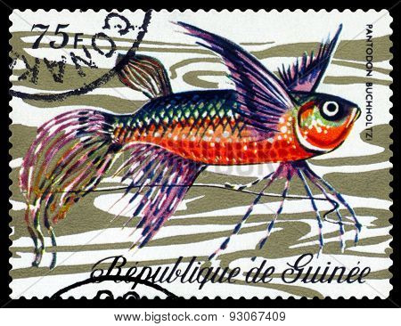 Vintage Postage Stamp. Fish Pantodon Buchholtzi.