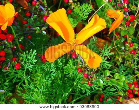 Large Yellow And Orange Flowers Close Up