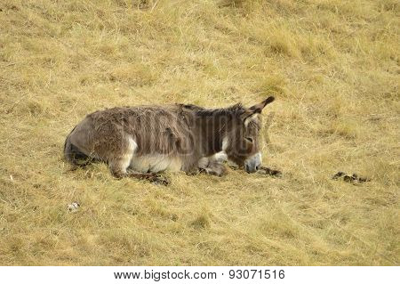 Donkey on the grass