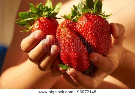 Several Big Red Ripe Strawberries In Child's Hands