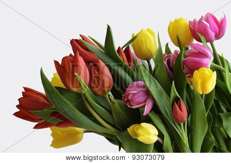 Yellow, Red And Purple Tulips On A White