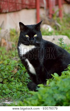 Black And White Cat Sitting