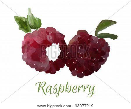Vector isolated raspberry