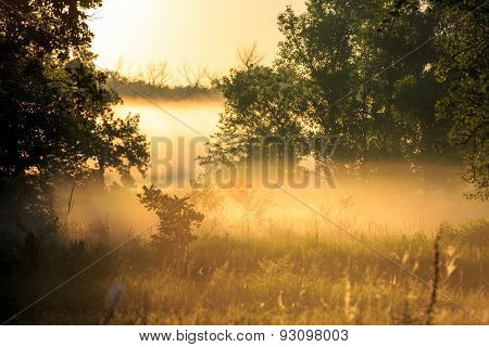 Morning landscape with mist among trees