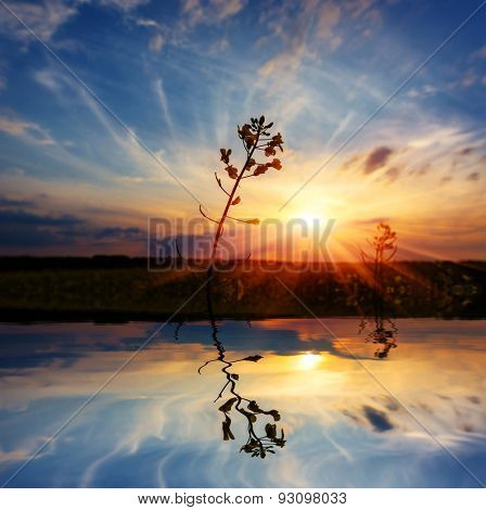 Scene with plant on sunset background with water reflection