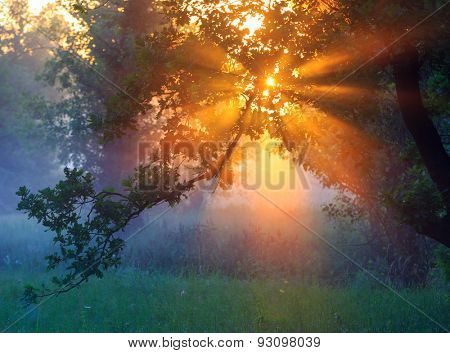 View on morning sunrise through trees