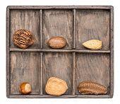 foto of pecan nut  - a variety of nuts  - JPG