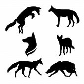 foto of animal silhouette  - Jackal set of black silhouettes - JPG
