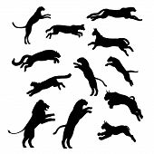 pic of ocelot  - Jumping cats and pathers - JPG