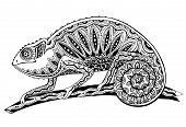 pic of chameleon  - picture of colorful chameleon lizard in graphic style - JPG