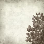image of leek  - textured old paper background with wild leek flowers  - JPG