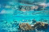 image of sea-scape  - Coral fish in Red Sea - JPG